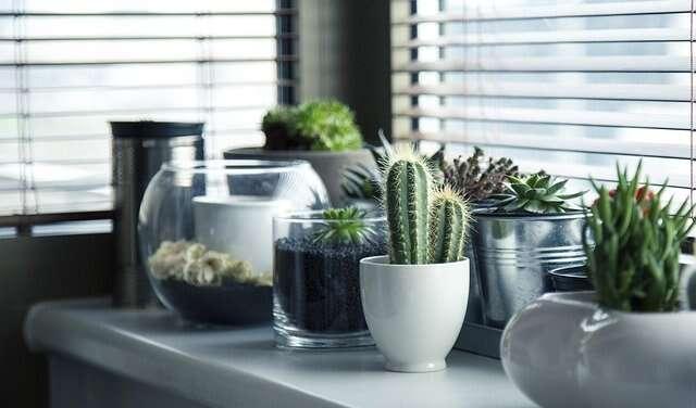 kitchen, home, garden
